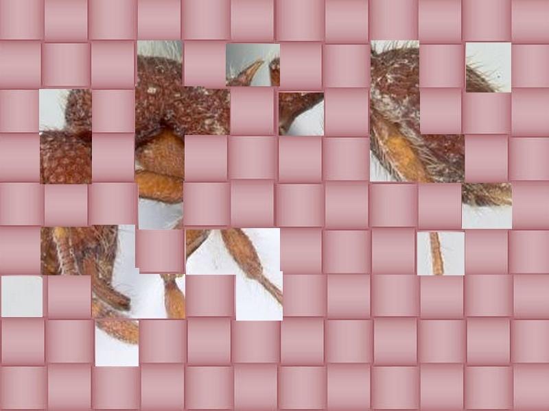 un animal - Blucat - 9 octobre trouvé par Martine - Page 2 Animal20