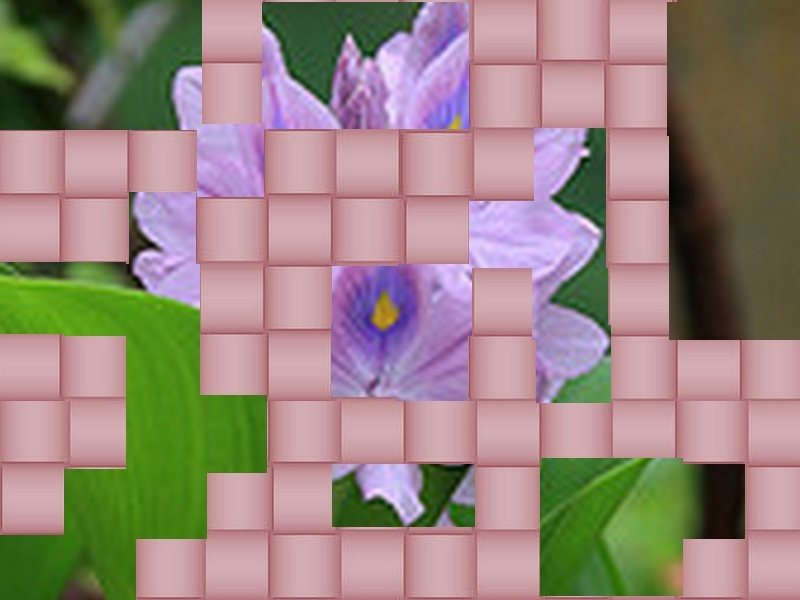 une fleur - blucat- 8 août trouvée par martine - Page 2 Fleur13