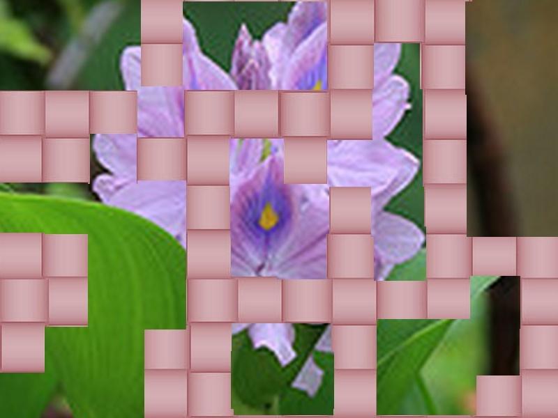 une fleur - blucat- 8 août trouvée par martine - Page 2 Fleur14