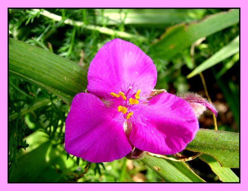 une fleur - blucat - 21 août trouvée par martin  Fleur_11