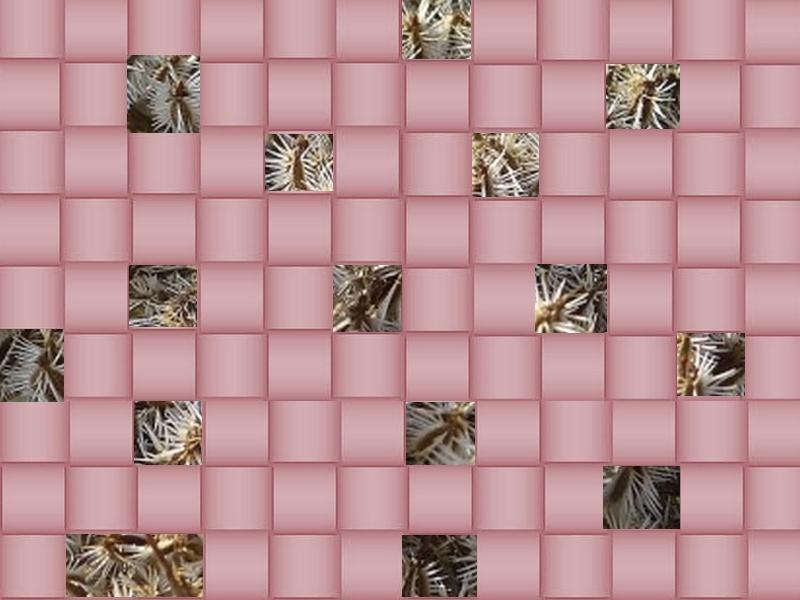 l'image énigme par  blucat (15juillet) trouvée par sylvie Graine10