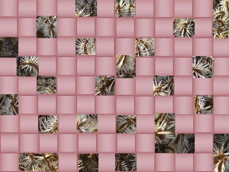 l'image énigme par  blucat (15juillet) trouvée par sylvie - Page 2 Graine11