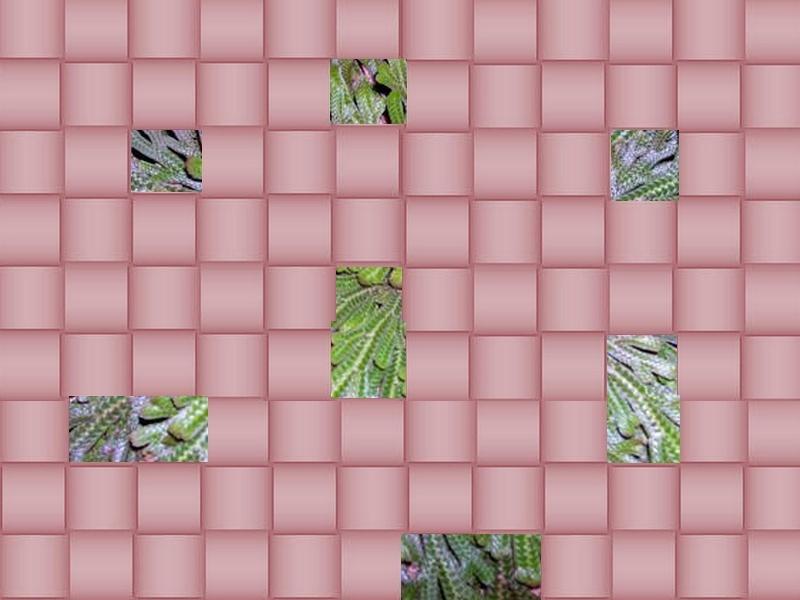 une plante à découvrir par blucat(29juillet)trouvée par sylvie Rose_d10