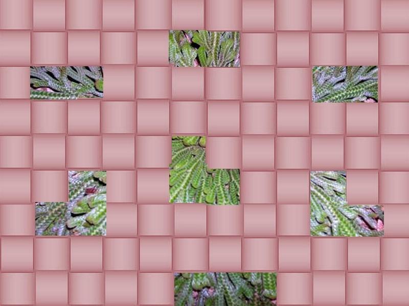 une plante à découvrir par blucat(29juillet)trouvée par sylvie Rose_d11