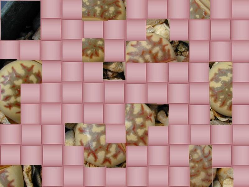 la chose à découvrir par blucat (3 juillet) trouvée par martin - Page 2 Sans_t18