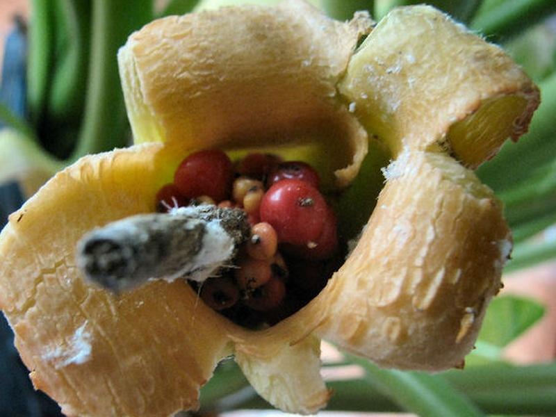 une fleur à découvrir par blucat (1 août) trouvée par sylvie Sans_t35