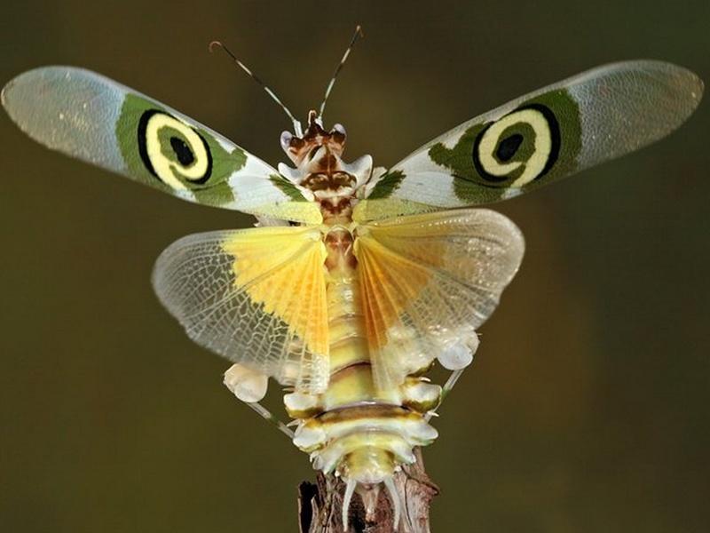 un insecte à découvrir , blucat (4 août) trouvé par ajonc Sans_t38
