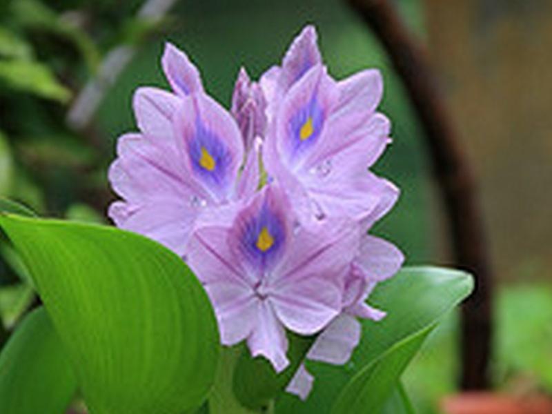 une fleur - blucat- 8 août trouvée par martine - Page 2 Sans_t39