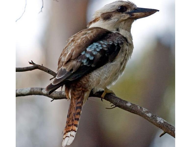 un oiseau - blucat- 17 août - trouvé par martine Sans_t42