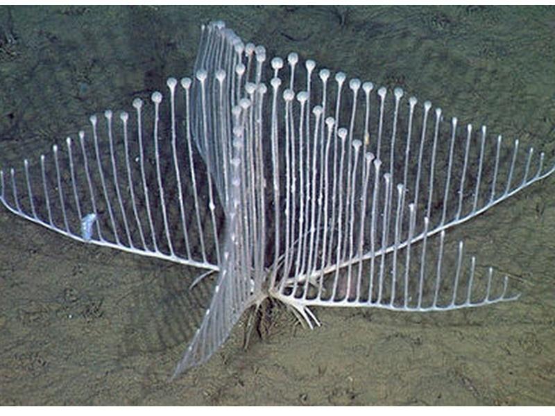 l'insolite de blucat - 25 août trouvé par Martin - Page 2 Sans_t47