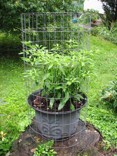 support cages for plants Wire_c15