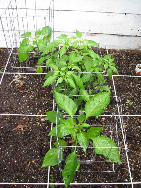 support cages for plants Wire_c16