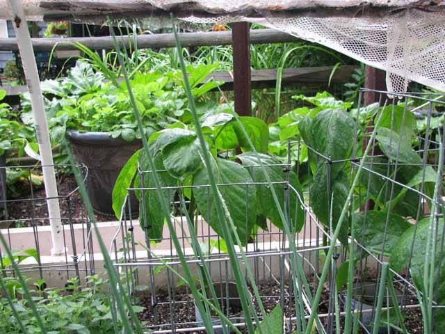 support cages for plants Wire_c20