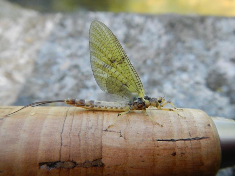 Photos d'insectes  - Page 6 Dscn1063
