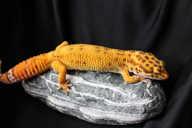 Geckos...! 410