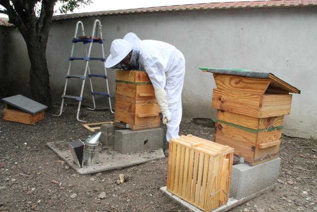 Chronique de mes abeilles Img_0913