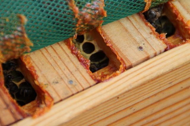 Chronique de mes abeilles Img_0914