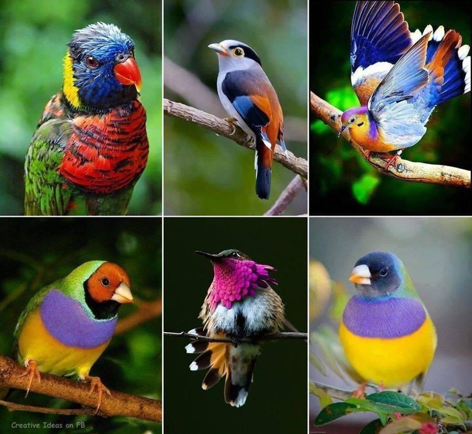 De si belles images... la Nature gâte nos pupilles. 10368310