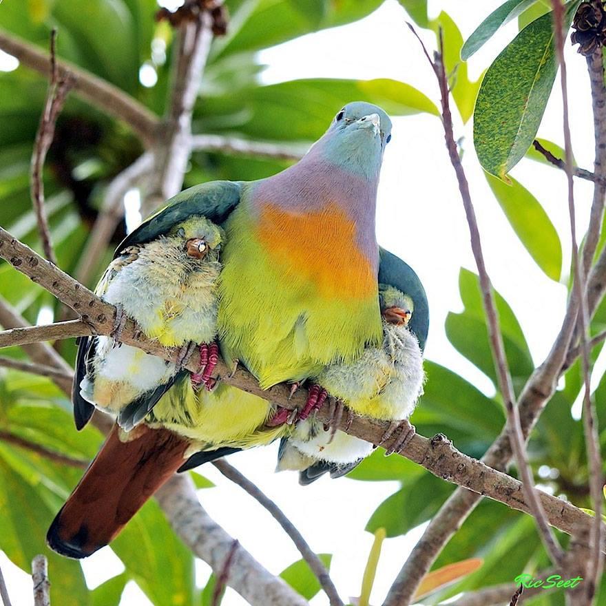 De si belles images... la Nature gâte nos pupilles. 10614210