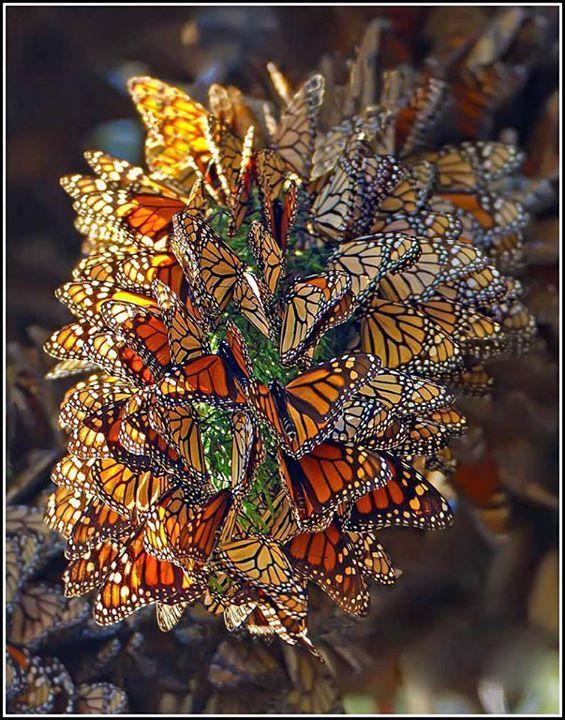 Incroyables photos de la merveilleuse nature Pap10