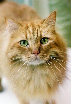 Cait's Kitty Profiles Fernki12