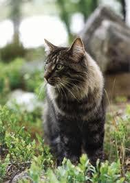 Cait's Kitty Profiles Mothki11