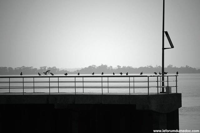 Port de Pauillac vu par Forum du Médoc 10177410