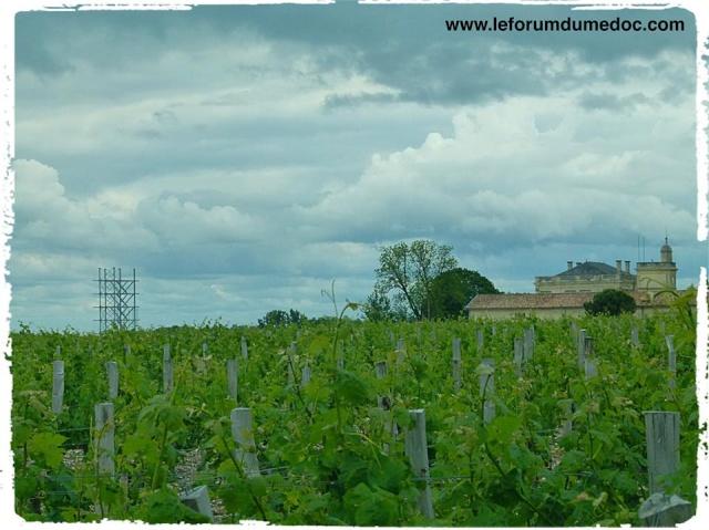 Nouveau point de vue sur Gruaud-Larose et son vignoble 10415610