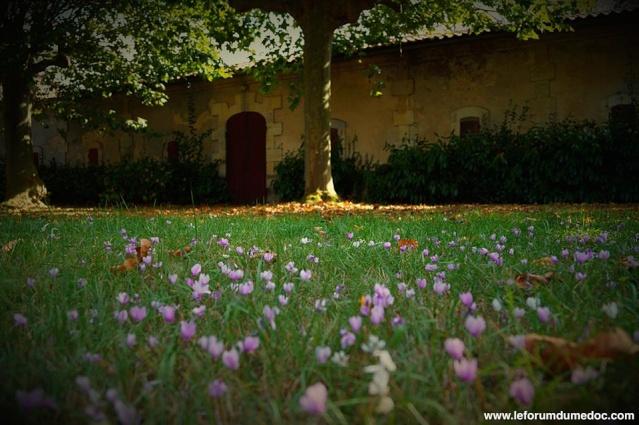 Le Parc municipal du Château d'Arche à Ludon Médoc 10641210