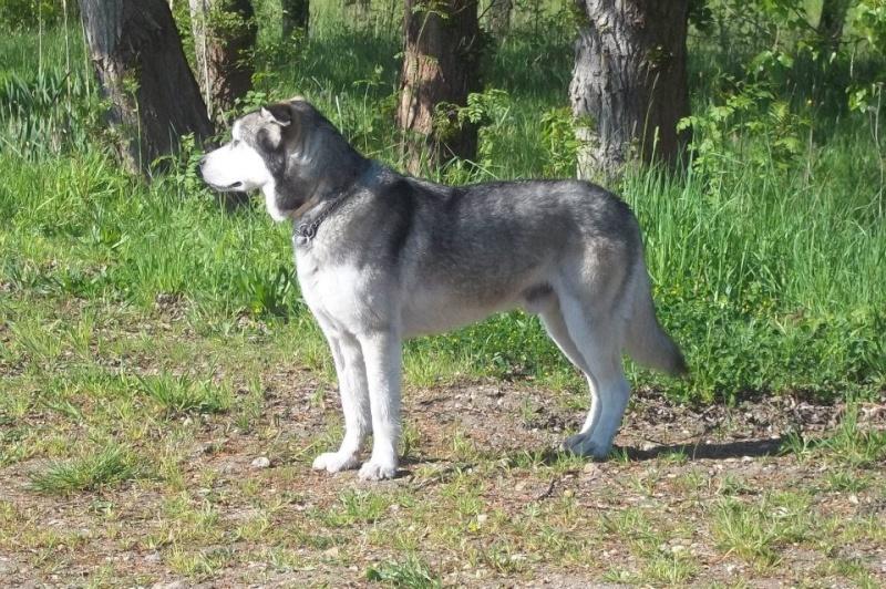 Je ne peux plus garder mon chien 52533011