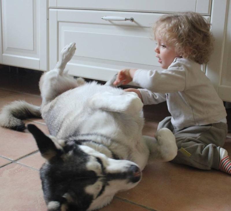 Je ne peux plus garder mon chien Lyam_e10