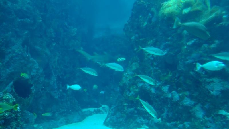 Océanopolis (Brest) Dsc00816