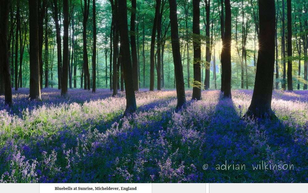 Forêt bleue - Bois de Hal - Hal - Belgique 01-06-10