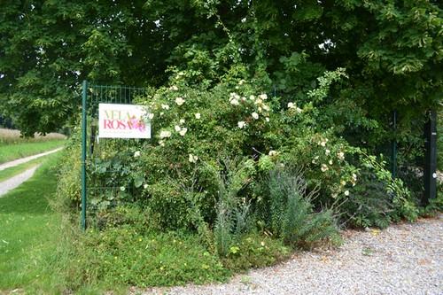 """Mela Rosa """"Plein feu sur les roses"""" 14-15 juin 2014 - Page 3 00122"""