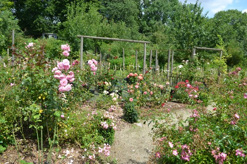 """Mela Rosa """"Plein feu sur les roses"""" 14-15 juin 2014 - Page 3 02111"""