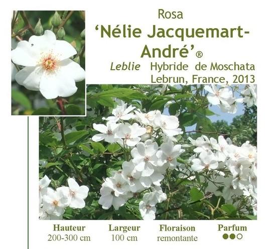 """Mela Rosa """"Plein feu sur les roses"""" 14-15 juin 2014 - Page 2 Image10"""