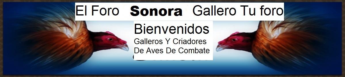 SONORA  GALLERO
