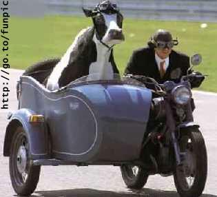 La vache et le prisonnier... 70110