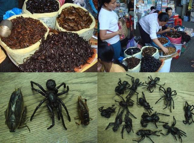 Pour éloigner les araignées Araign12