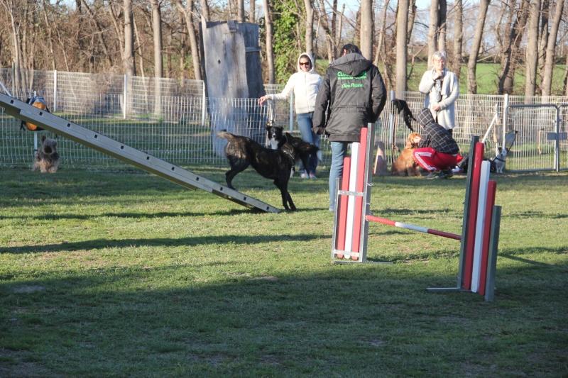 Lulu et l'agility Groupe11