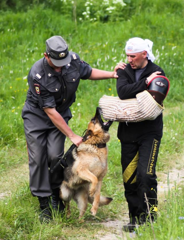 Соревнования по многоборью  со служебными собаками Img_2812