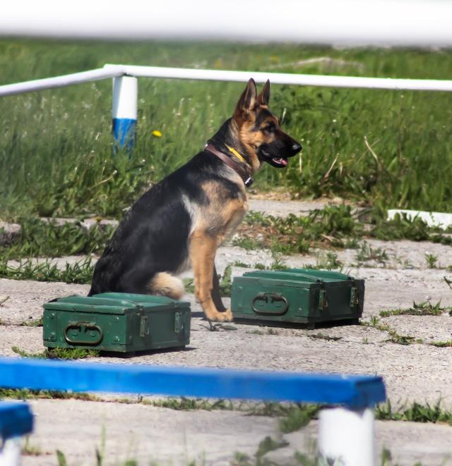 Соревнования по многоборью  со служебными собаками Img_3215