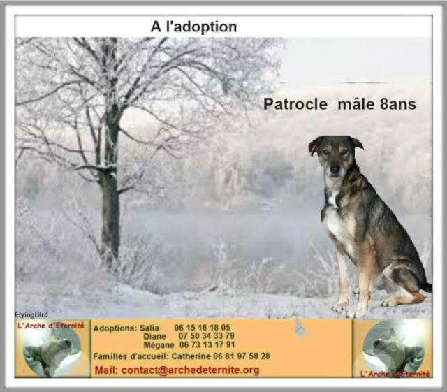 patrocle - PATROCLE - croisé Berger né en 2006 - Sauvé de l'Équarrissage - Parrainé par Skara - SOS-R-SC Patroc12