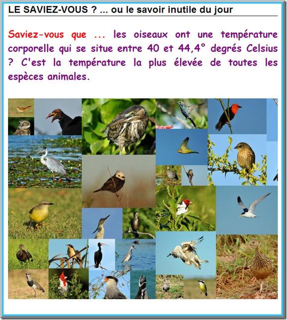 La T° des oiseaux E210