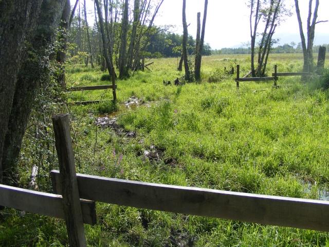 Marais de Lavours Dscf9118