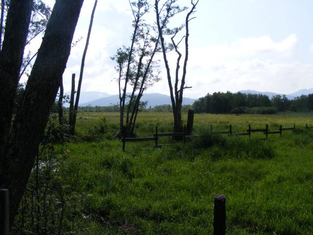 Marais de Lavours Dscf9120