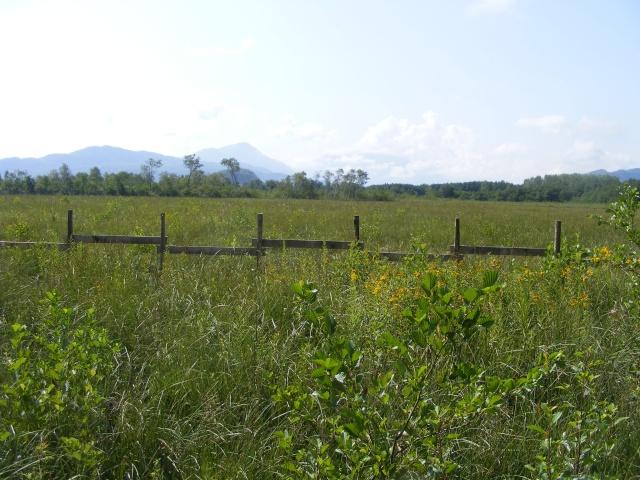 Marais de Lavours Dscf9215