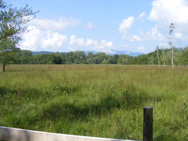 Marais de Lavours Dscf9218