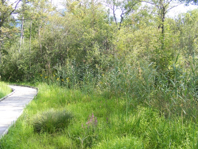 Marais de Lavours Dscf9219