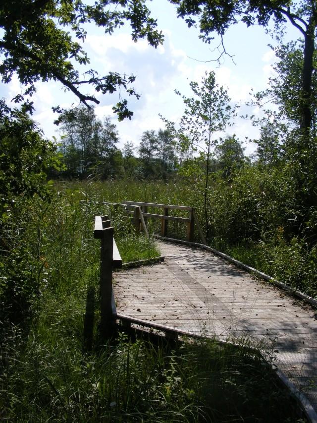 Marais de Lavours Dscf9220